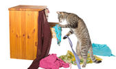 Curious cat rummaging in a drawer — Stock Photo