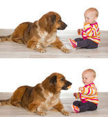 Generous baby sharing biscuit with dog — Stock Photo
