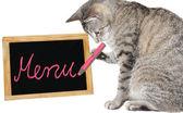 Lindo gato escribiendo sobre un tablero del menú — Foto de Stock