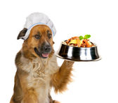 Dog serving up a gourmet meal — Stock Photo