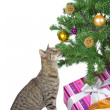 Stock Photo: Cat eyeing tempting Christmas decorations