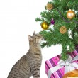 Cat eyeing the tempting Christmas decorations - Stock Photo