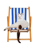 Pampered cat on a deckchair — Stock Photo