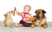 Two dogs flanking a cute baby — Stok fotoğraf