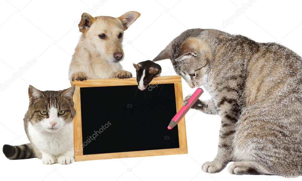 Resultado de imagem para gato a escrever