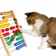 Clever cat mathematician - Stock Photo