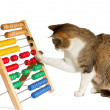 Stock Photo: Clever cat mathematician