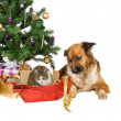 Cat and dog opening Christmas gifts - Stock Photo