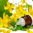 Chelidonium for homeopathy — Stock Photo
