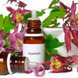 Aquilegifor homeopathy — Stock Photo #24569171