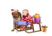 Baby and dog on Christmas sled — Stock Photo