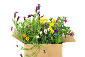Fresh Flowers in a box — Stockfoto