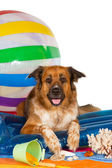 Happy dog at the seaside — Stock Photo