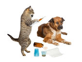 Veterinarian cat treating sick dog on white — Stock Photo