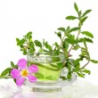 Infusion from the Rockrose or Cistus albidus — Stock Photo