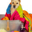 Cute dog drying off after a bath — Stock Photo