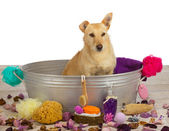 Pampering time at the dog parlour — Stock Photo