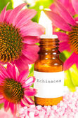 Bottle of Echinacea essential oil and flowers — Stock Photo