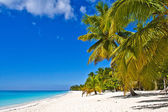 Dominican beach — Stock Photo