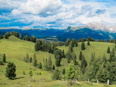 Green fields with trees and mountains far — Stock Photo