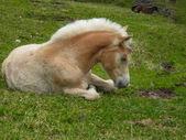 Klein paard is op de weide — Stockfoto