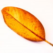 Yellow-red leaf isolated on a white — Stockfoto