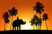Elefante e un pilota su sfondo tramonto tropicale — Foto Stock