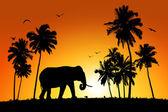 Lonely elephant on tropical sunset background — Stock Photo