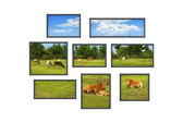 Several windows on a white wall with rural landscape — Stock Photo