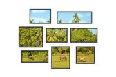 Several windows on a white wall with jungle landscape — Stock Photo