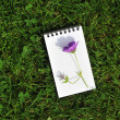 Blank notebook with violet flower on grass field — Stock Photo