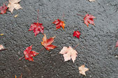 Maple leaves on wet road after rainstorm — Stock Photo