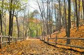 Autumn hiking trail — Stock Photo