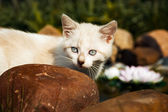 Yavru kedi — Stok fotoğraf
