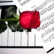 Rose and piano — Stock Photo