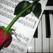 Rose piano music — Stock Photo