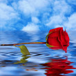 Red rose reflected in water — Stock Photo #24894845