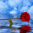 Red rose reflected in water — Foto de stock #24895101