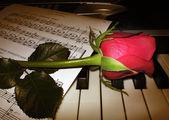Rose piano music — Stock Photo
