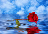 Red rose reflected in water — Stock Photo