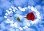 Rose in clouds — Stock Photo