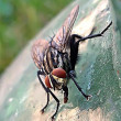 Stock Photo: Fly...