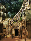 Giant tree covering the stones of the fascinating temple of Ta Prohm in Angkor Wat (Siem Reap, Cambodia). — Fotografia Stock