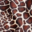 Stock Photo: Giraffe skin