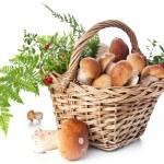 Boletus mushrooms in wicker basket — Stock Photo #24480817