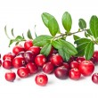 Ripe cranberries with leaves — Stock Photo #24480933