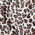 Leopard skin Pattern texture — Stock Photo