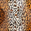 Cheetah skin Pattern texture — Stock Photo