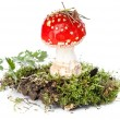 Red poison mushroom amanita in moss - Stock Photo