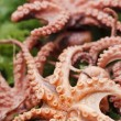 Raw delicatessen octopus meat on a plate - Stock Photo